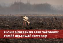 Photo of Strażacy z Poręby Spytkowskiej organizują zbiórkę na Biebrzański Park Narodowy / 22 kwietnia 2020