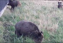 Photo of Ludzie do lasu – a dziki do ogrodu / video