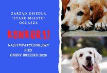 Photo of Najsympatyczniejszy Pies Gminy Brzesko – w tym roku tylko w internecie