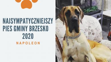 Photo of Rozstrzygnięty konkurs na Najsympatyczniejszego Psa Gminy Brzesko 2020