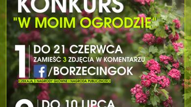 Photo of Gmina Borzęcin. Pochwal się swoim ogrodem
