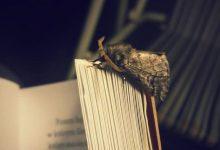 """Photo of """"Książka w obiektywie"""" – konkurs rozstrzygnięty"""